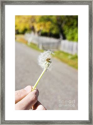 Dreamy Dandelion Breeze Framed Print