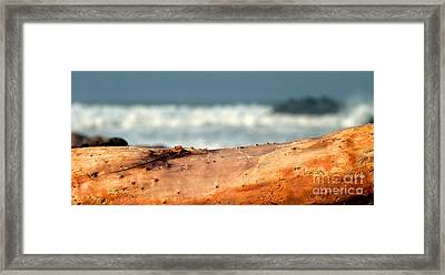 Drift Wood Framed Print by Henrik Lehnerer