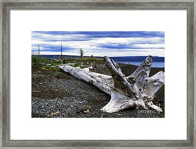 Driftwood On Beach Framed Print by Thomas R Fletcher