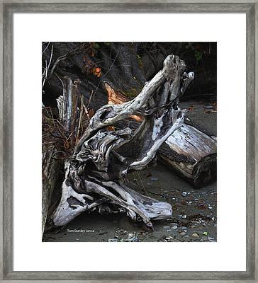 Driftwood On The Beach Framed Print by Tom Janca