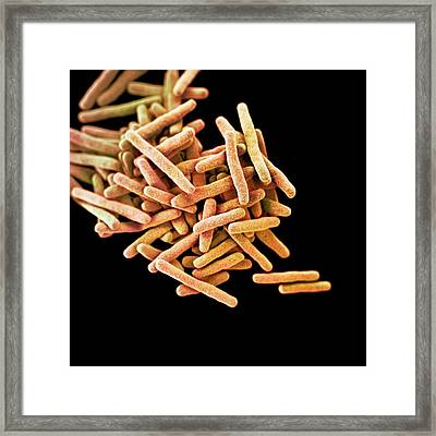 Drug-resistant Tuberculosis Bacteria Framed Print by Cdc/ Melissa Brower