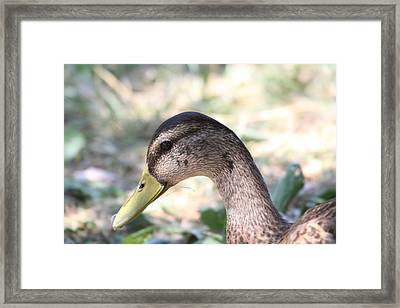 Duck - Animal - 011314 Framed Print by DC Photographer