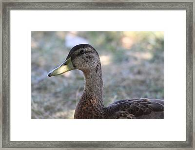 Duck - Animal - 01135 Framed Print by DC Photographer