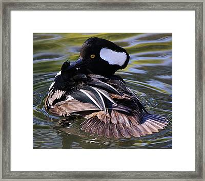 Duck Framed Print by Paulette Thomas