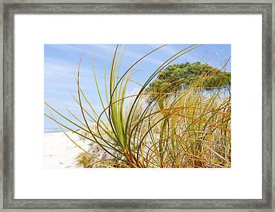 Dune Grass Framed Print by Les Cunliffe