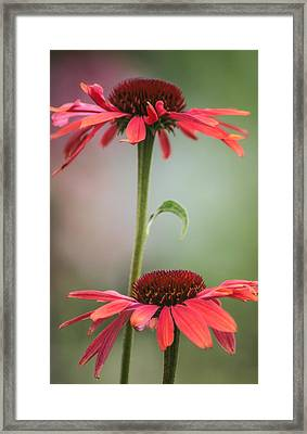 Framed Print featuring the photograph Duo by Jacqui Boonstra