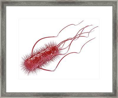 E. Coli Bacterium Framed Print by Maurizio De Angelis