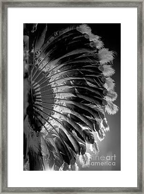 Eagle Feathers Framed Print