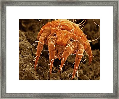 Ear Mite (otodectes Cynotis) Framed Print by Power And Syred