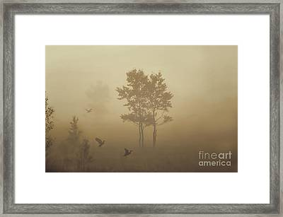 Early Morning Canaan Valley Framed Print by Dan Friend
