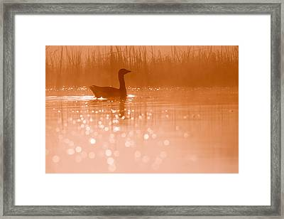 Early Morning Magic Framed Print