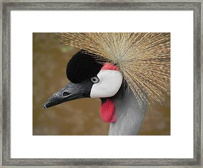 East African Crowned Crane Framed Print