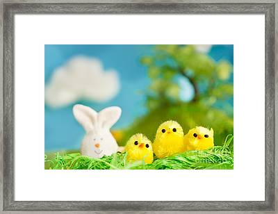 Easter Chicks Framed Print by Mythja  Photography