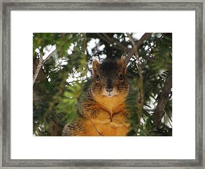 Eastern Fox Squirrel Framed Print