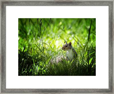 Framed Print featuring the photograph Eastern Gray Squirrel by Zoe Ferrie