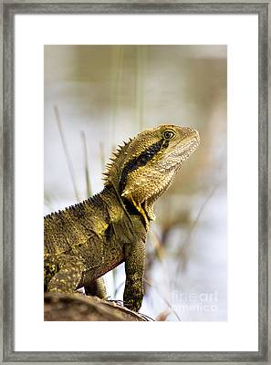 Eastern Water Dragon Framed Print by Jorgo Photography - Wall Art Gallery