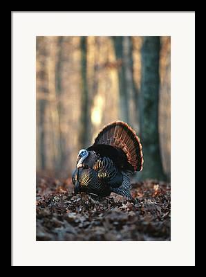 Gamebird Photographs Framed Prints