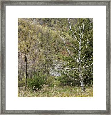 Easton Mountain Trees And Pond Framed Print by John Arnaldi