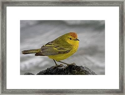 Ecuador, Galapagos Islands Framed Print
