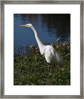Egret In Flowers 8x10 Framed Print by David Lynch