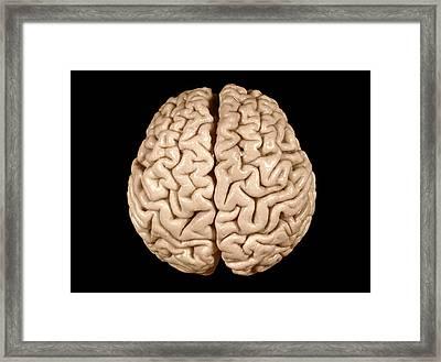 Einstein's Brain Framed Print