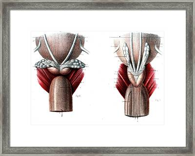 Ejaculatory System Framed Print by Collection Abecasis