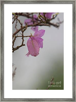 Elegance Of Nature Framed Print