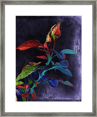 Elegance Framed Print by Sylvia Thornton