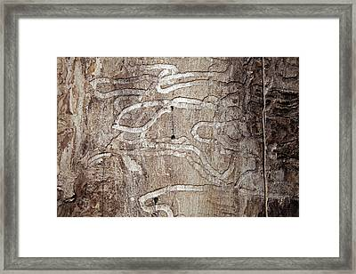 Emerald Ash Borer Tracks On Dead Tree Framed Print by Jim West