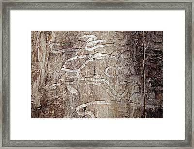 Emerald Ash Borer Tracks On Dead Tree Framed Print