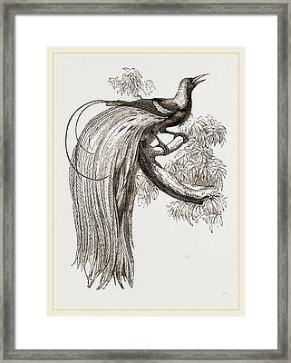 Emerald Bird Of Paradise Framed Print by Litz Collection