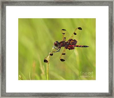 Enchantment Framed Print by Inspired Nature Photography Fine Art Photography