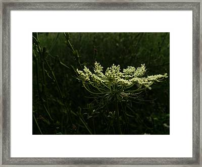 Energy Framed Print by Lucy D