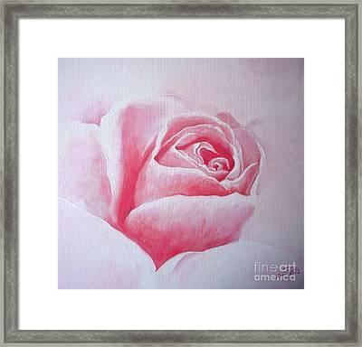 English Rose Framed Print by Sandra Phryce-Jones