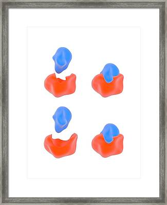 Enzyme Reaction Models Framed Print by Science Photo Library