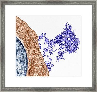 Epstein-barr Virus Framed Print