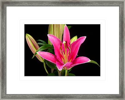 Erotic Pink Purple Flower Selection Romantic Lovely Valentine's Day Print Framed Print by Navin Joshi