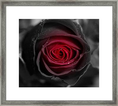 Eternally Yours Rose Framed Print by Marie Neder