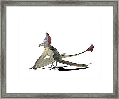 Eudimorphodon Pterosaur Framed Print by Friedrich Saurer