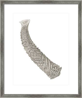 Euplectella Glass Sponge Framed Print by Natural History Museum, London