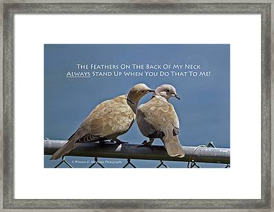 Eurasian Collared Dove Framed Print