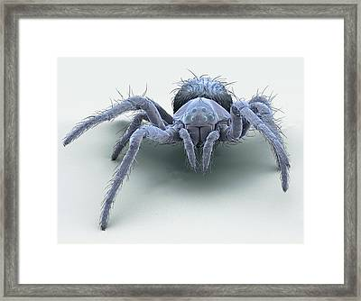 European Garden Spiderling Framed Print by Steve Gschmeissner