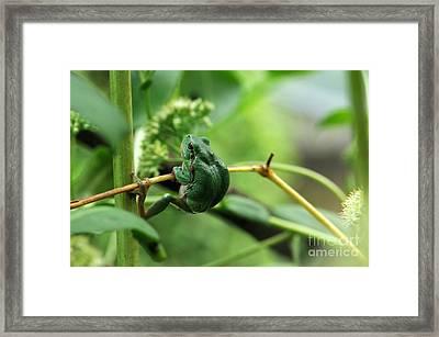European Treefrog Framed Print by Reiner Bernhardt