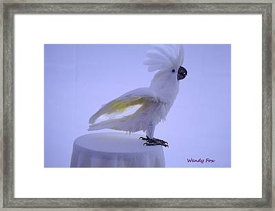 Excited Framed Print by Wendy Fox