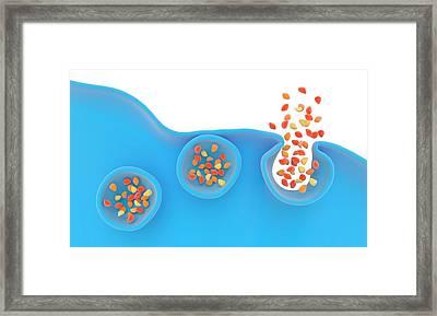 Exocytosis Framed Print