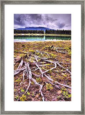 Exposed Framed Print by Tara Turner
