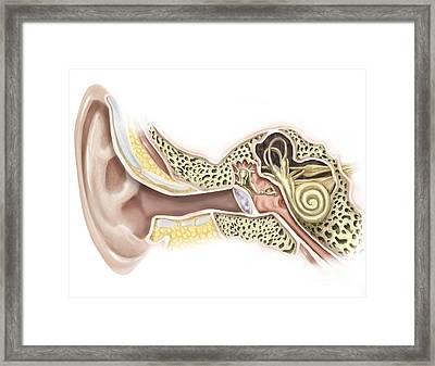 External Auditory Canal Of Human Ear Framed Print