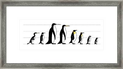 Extinct And Living Penguin Comparison Framed Print