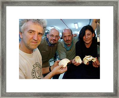 Extraction Of Fossil Dna Framed Print by Javier Trueba/msf