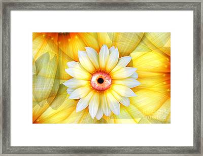 Eye Of Beauty Framed Print